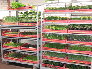 Groenteplanten Jongerius