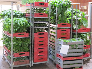 Groente- planten (overig)
