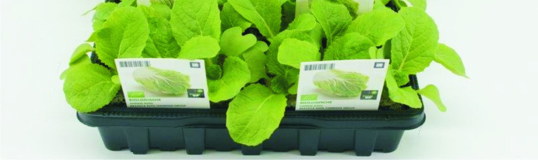 Groenteplanten-(6-pack)
