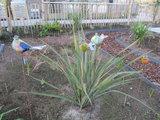 Vogel glas 1 (Merk: Gerry's Garden)_