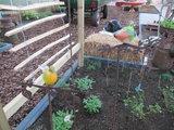 Vogel glas op tak 1 (Merk: Gerry's Garden)_