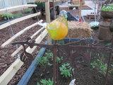 Vogel glas op tak 2 (Merk: Gerry's Garden)_