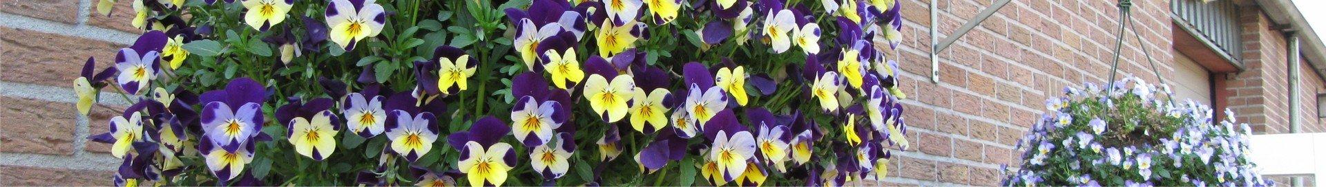 Hangpotten-&-Flowerbags