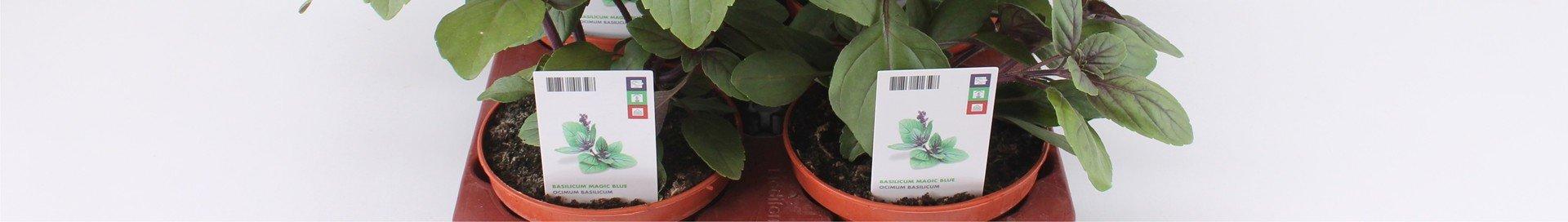 Kruiden-in-pot-12-cm
