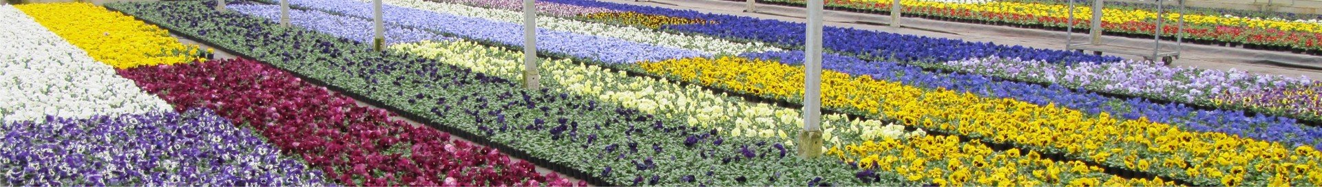 Vroege-voorjaar-(februari-maart)